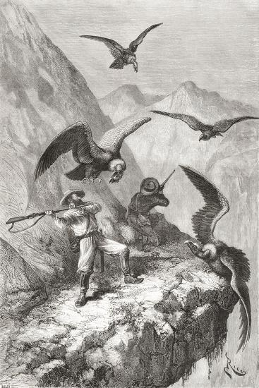 Édouard François André and Companion Being Attacked by Condors Near Calacali--Giclee Print