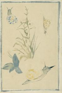 Sketches of Snails, Flowering Plant, C.1880 by Edouard Manet