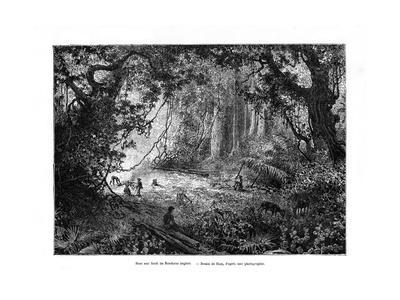 Rainforest in British Honduras, 19th Century