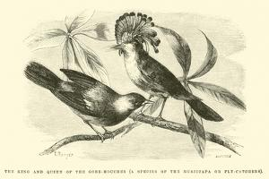 The King and Queen of the Gobe-Mouches, a Species of the Muscicapa or Fly-Catchers by Édouard Riou