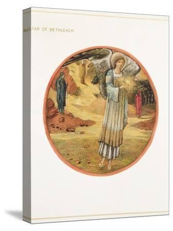 The Flower Book: WW. Star of Bethlehem, 1905