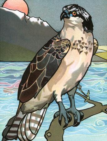 Bird Illustration, The Osprey, 1899