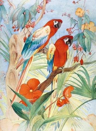 The Quaint Macaw, Red and Blue Macaws (Ara Macao) , From the Painting entitled Aristocrats