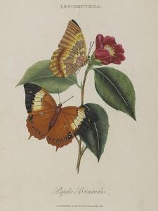 Album Donovan : an epitome of the natural history of insects in China by Edward Donovan