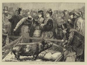 Visitors at the Cattle Show, a Pig Pen by Edward Frederick Brewtnall
