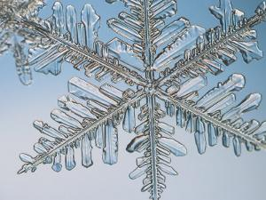 Snowflake, Close Up by Edward Kinsman