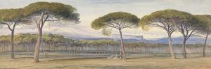 A View of the Pine Woods Above Cannes, 1869 by Edward Lear