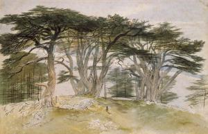 Cedars of Lebanon by Edward Lear
