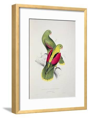 Crimson-Winged Parakeet