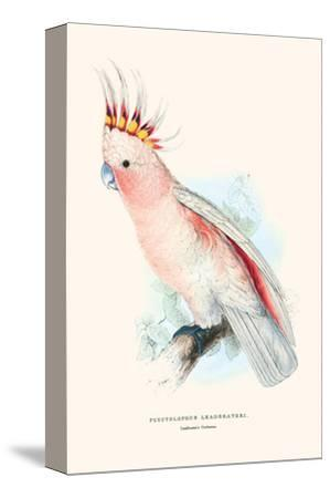 Leadbeater's Cockatoo - Cocatua Leadbeateri