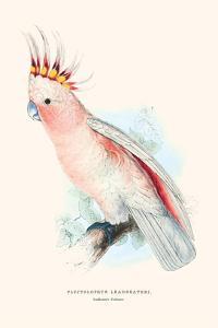 Leadbeater's Cockatoo - Cocatua Leadbeateri by Edward Lear