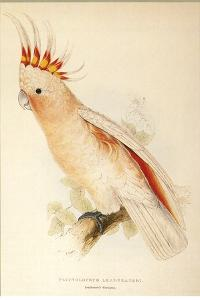 Leadbeater'S, Major Mitchell'S, or Pink Cockatoo by Edward Lear