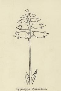 Piggiwiggia Pyramidalis by Edward Lear
