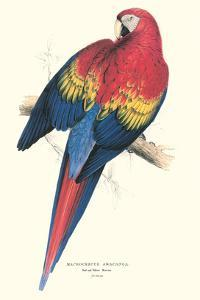 Red and Yellow Macaw - Ara Macao by Edward Lear