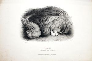 Sketches of Animals at the Zoological Gardens by Edward Lear