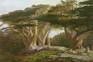 The Cedars of Lebanon, 1861 by Edward Lear