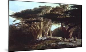 The Cedars of Lebanon by Edward Lear