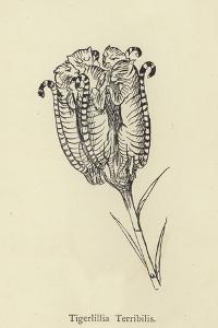 Tigerlillia Terribilis by Edward Lear