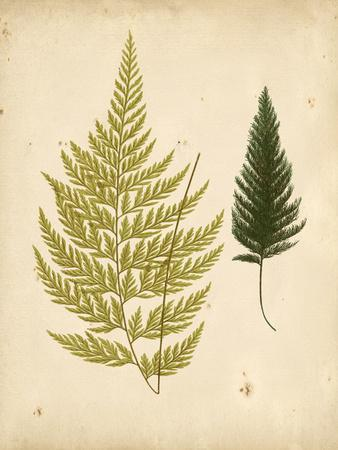 Cottage Ferns I