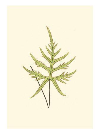 Woodland Ferns IV