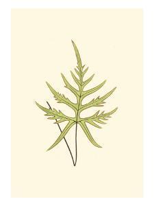 Woodland Ferns IV by Edward Lowe