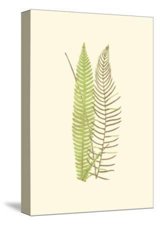 Woodland Ferns V