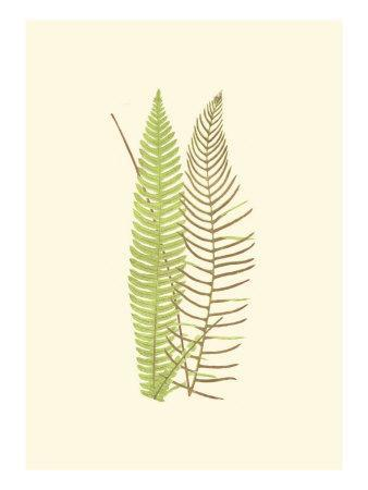 Woodland Ferns V