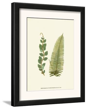 Woodland Ferns VI
