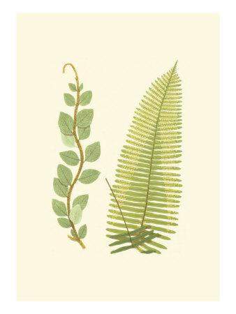 Woodland Ferns VI