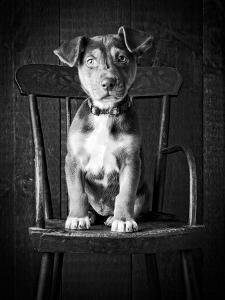 Mutt Black & White by Edward M. Fielding