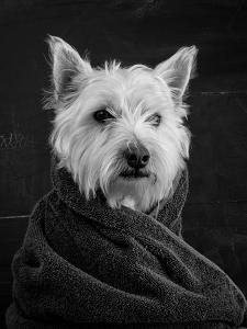 Portrait of a Westy Dog by Edward M. Fielding