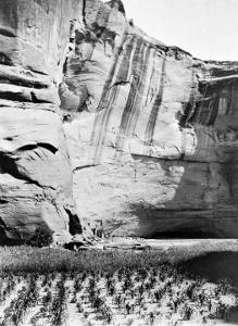 Navajo Farming by Edward S^ Curtis