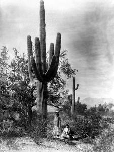 Saguaro Fruit Gatherers by Edward S^ Curtis