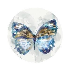 Indigo Butterfly I by Edward Selkirk