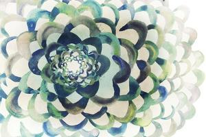Lotus by Edward Selkirk