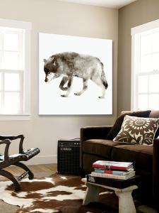 Wolf by Edward Selkirk