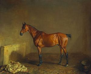 A Portrait of 'Marshall' a Bay Racehorse, in a Stall by Edward Troye