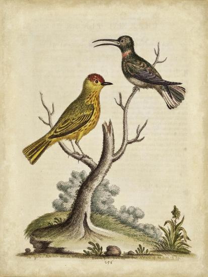 Edwards Bird Pairs IV-George Edwards-Art Print