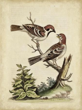 Edwards Bird Pairs VI-George Edwards-Art Print