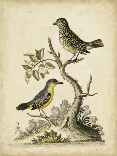 Edwards Bird Pairs VII-George Edwards-Art Print