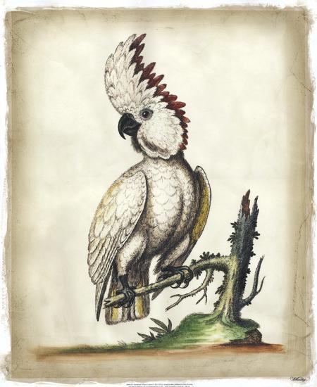 Edwards' Cockatoo-George Edwards-Art Print