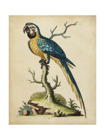 https://imgc.artprintimages.com/img/print/edwards-parrots-ii_u-l-q1bfvs80.jpg?p=0