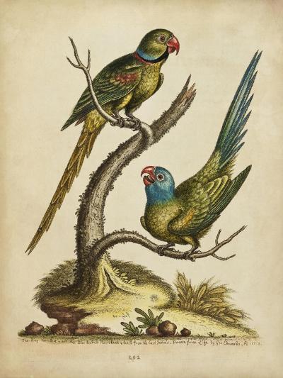 Edwards Parrots V-George Edwards-Art Print