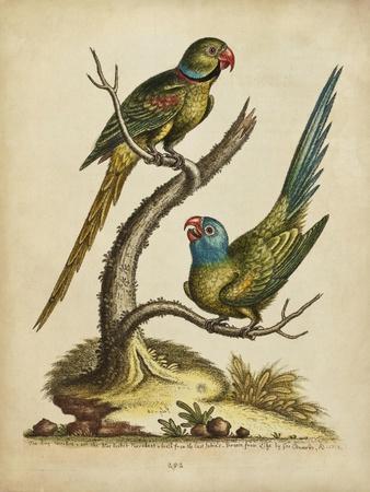 https://imgc.artprintimages.com/img/print/edwards-parrots-v_u-l-q1bf7o00.jpg?p=0