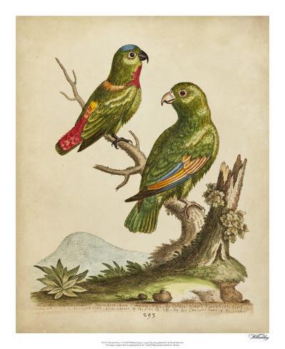 Edwards Parrots VI-George Edwards-Giclee Print