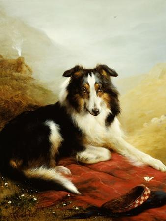 A Collie, the Guardian of the Flock, 1908