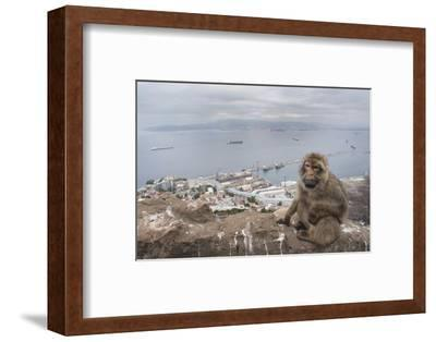Barbary Macaque (Macaca Sylvanus) Sitting with Harbour of Gibraltar City in the Background