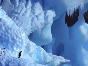 Two Adelie Penguins on Iceberg, Antarctica by Edwin Giesbers