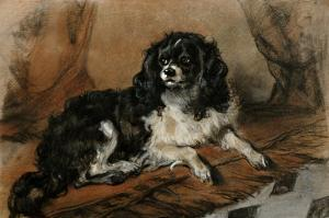 A King Charles Spaniel by Edwin Henry Landseer