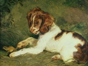 A Puppy Teasing a Frog, 1824 by Edwin Henry Landseer